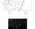 FIGS. 7A-7C represent the nucleation site spatial distribution. FIG. 7A represents a coordinate map graph showing the position of the nucleation sites and their nearest neighbor captured. FIG. 7B represents a graph showing the cumulative probability distribution of the nucleated droplet nearest neighbors compared to the predictions for a random distribution. FIG. 7C represents an OM image capturing the distribution of droplet nucleation sites on the Au/thiol functionalized CuO surface.