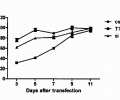 Extended knockdown of GFP by csiRNA (csi25), T1-cleaved csiRNA (T1-csi25), and siRNA (si) with Mirus TranslT-X2® in GFP-expressing HeLa cells, at an effective siRNA concentration of 5 nM.