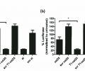 Luciferase knockdown by luciferase-targeting and scrambled (scr) csiRNA (csi25), T1-cleaved csiRNA (T1-csi25), and siRNA with Mirus TranslT-X2® in luciferase-expressing (a) SKOV3 cells and (b) UCI1O1 cells, with normalization of measured luciferase expression to total protein.