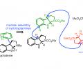 Synthesis of oligocyclotryptamines
