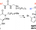 Synthesis of agelastatin derivatives