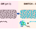 (E) Schematic diagram illustrating the process of scalable and uniform tissue-gel formation without perfusion using SWITCH. GA molecules diffuse into an intact tissue without reacting with biomolecules in pH 3 buffer (SWITCH-Off step). When GA is uniformly dispersed throughout the tissue, the sample is moved to pH 7 buffer (SWITCH-On step) to initiate global gelation/fixation and achieve uniform tissue preservation.