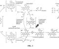 Mechanism of light-assisted Eosin Y photocatalyst regeneration.