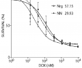 Bivalent NRG does not reduce the cytotoxic activity of DOX on cancer cells.