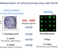 Miniaturization of colony formation assay with ToxChip