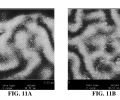 FIGS. 11A-B are atomic force micrographs of nanoparticle coatings.