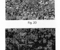 FIGS. 2A-2F are SEM photomicrographs illustrating various particles formed using in situ techniques, according to one embodiment of the invention;