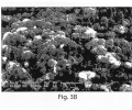 FIGS. 3A-3C are SEM photomicrographs illustrating various particles formed using ex situ techniques, according to another embodiment of the invention;