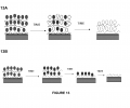 FIGS. 13A and 13B depict possible mechanisms of drug release from poly 1/poly (BCD)-drug films. In FIG. 13A, drug diffuses out of the film without cyclodextrin; drug release is uncontrolled. In FIG. 13B, drug is being released inside a cyclodextrin in a controlled manner consistent with surface erosion of the polymer layers.