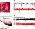 Figure 3: In vivo neural recordings in rats.